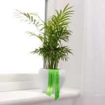 Personalised Parlour Palm Plant