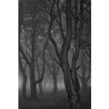 Moonlit Copse  - Limited Edition Print