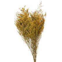 Bouquet of dried ochre and yellow flowers (0x0x0cm) - Maisons du Monde
