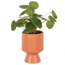 Pilea artificiale con vaso in ceramica terracotta - Verde - 10x27x10cm - Maisons du Monde