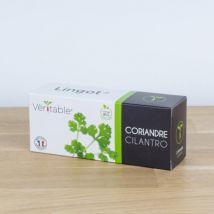 Lingot pour potager Véritable Coriandre Bio - Plante, graine, bulbe