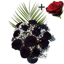 A single Huge Headed Red Explorer Rose surrounded by 11 Black Roses