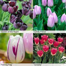 Tulip Bumper Collection